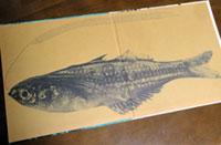 雑魚(ジャケット見開き中)
