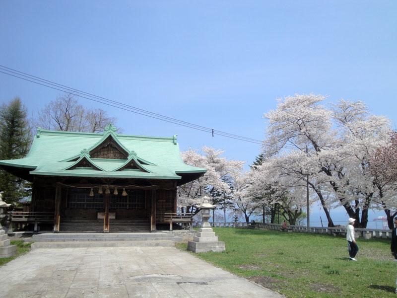 勝手に選んでみました「小樽の桜の見所、勝手に5選+α」【改訂版】