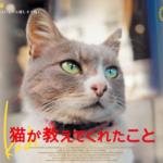 猫の街イスタンブールで暮らす猫たちと人との触れ合いを描くドキュメンタリー映画「猫が教えてくれたこと」の予告編公開